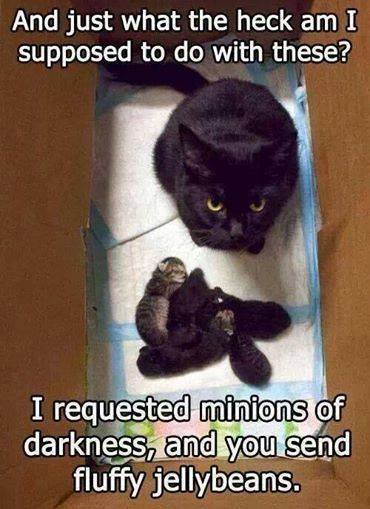 BRING ME MINIONS, NOT KITTENS!